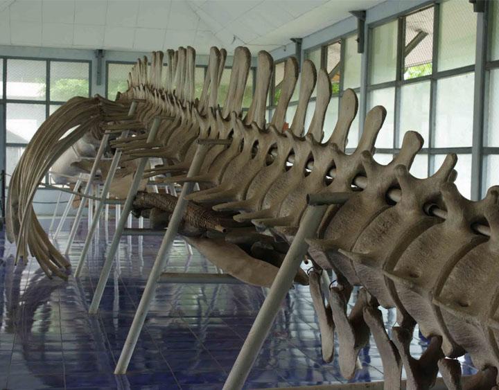 Kupang Museum