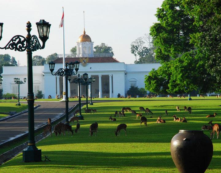The Bogor botanical gardens