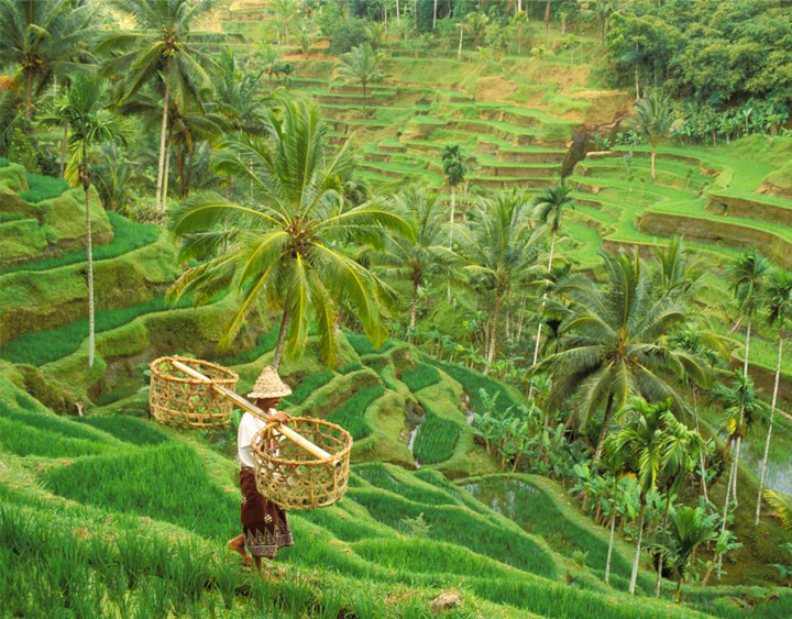 Bali Countryside Tour