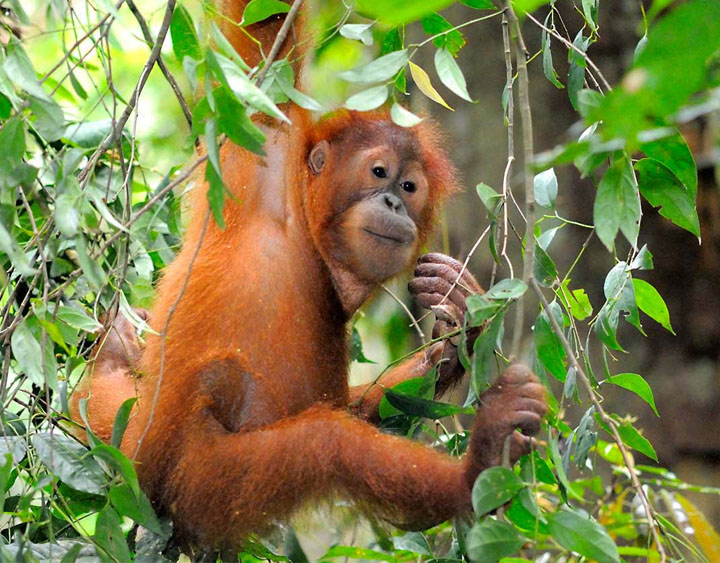 4 Days Orang Utan - Camp Leakey Wildlife