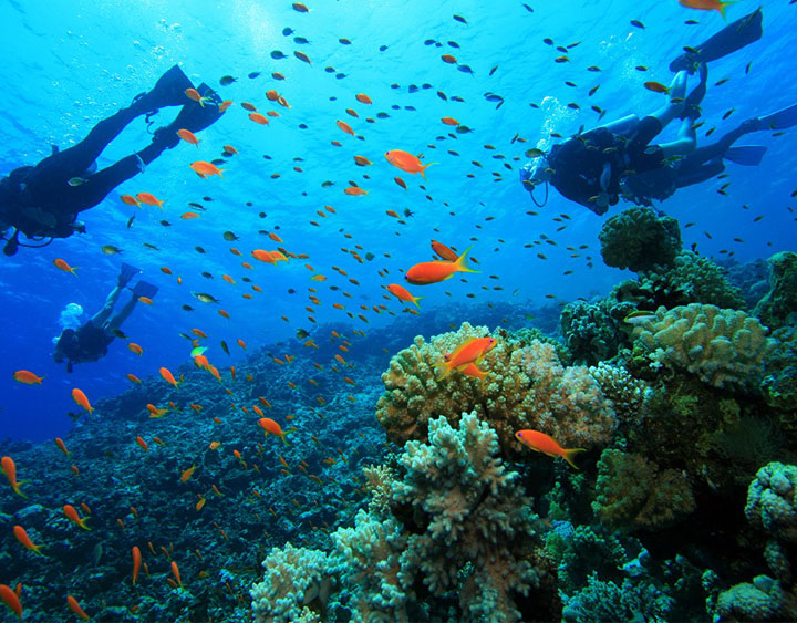 4 Days Flores Diving